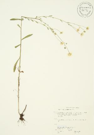 ( - JAG 0210)  @11 [ ] Copyright (2009) Steven Newmaster University of Guelph BIO Herbarium