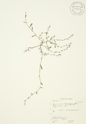( - JAG 0214)  @11 [ ] Copyright (2009) Steven Newmaster University of Guelph BIO Herbarium