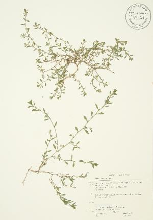 ( - JAG 0127)  @11 [ ] Copyright (2009) Steven Newmaster University of Guelph BIO Herbarium