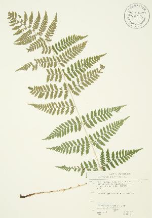 ( - JAG 0142)  @11 [ ] Copyright (2009) Steven Newmaster University of Guelph BIO Herbarium