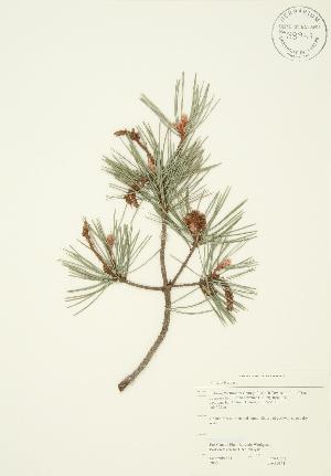 ( - JAG 0151)  @11 [ ] Copyright (2009) Steven Newmaster University of Guelph BIO Herbarium