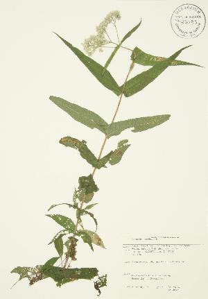 ( - JAG 0045)  @11 [ ] Copyright (2009) Steven Newmaster University of Guelph BIO Herbarium