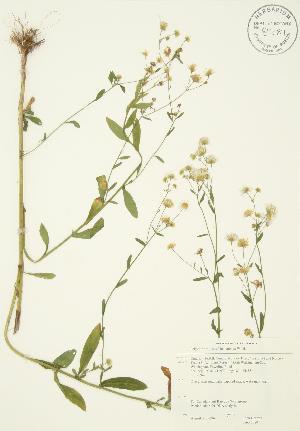 ( - JAG 0080)  @11 [ ] Copyright (2009) Steven Newmaster University of Guelph BIO Herbarium