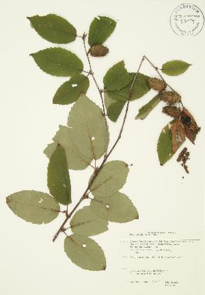 ( - JAG 0106)  @11 [ ] Copyright (2009) Steven Newmaster University of Guelph BIO Herbarium