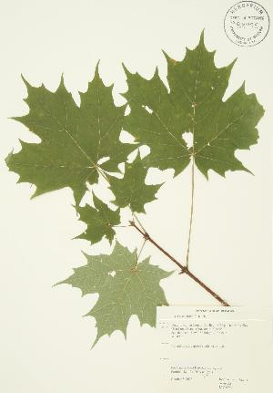 ( - JAG 0251)  @11 [ ] Copyright (2009) Steven Newmaster University of Guelph BIO Herbarium