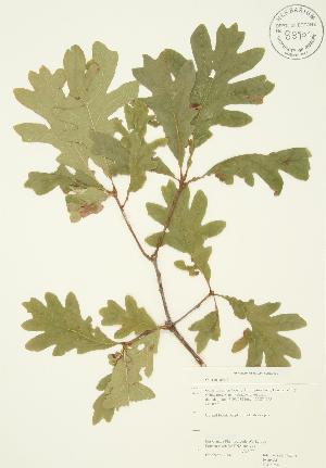 ( - JAG 0254)  @11 [ ] Copyright (2009) Steven Newmaster University of Guelph BIO Herbarium