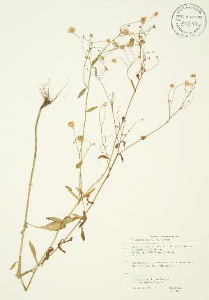 ( - JAG 0268)  @11 [ ] Copyright (2009) Steven Newmaster University of Guelph BIO Herbarium