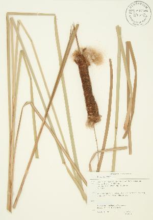 ( - JAG 0274)  @11 [ ] Copyright (2009) Unspecified University of Guelph BIO Herbarium