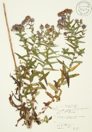 ( - JAG 0275)  @11 [ ] Copyright (2009) Steven Newmaster University of Guelph BIO Herbarium