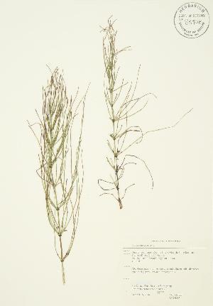 ( - JAG 0288)  @11 [ ] Copyright (2009) Steven Newmaster University of Guelph BIO Herbarium