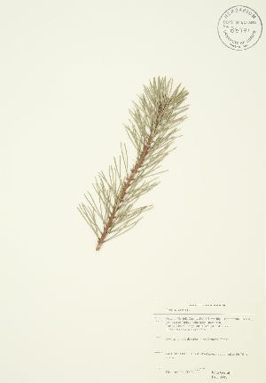 ( - JAG 0347)  @11 [ ] Copyright (2009) Steven Newmaster University of Guelph BIO Herbarium