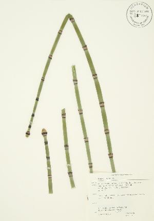 ( - JAG 0303)  @11 [ ] Copyright (2009) Steven Newmaster University of Guelph BIO Herbarium