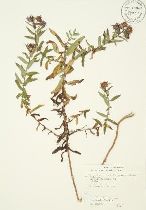 ( - JAG 0311)  @11 [ ] Copyright (2009) Steven Newmaster University of Guelph BIO Herbarium