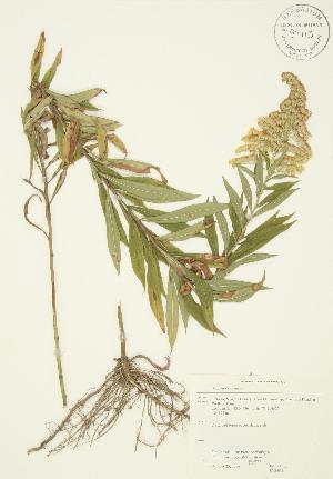 ( - JAG 0314)  @11 [ ] Copyright (2009) Steven Newmaster University of Guelph BIO Herbarium