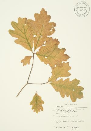 ( - JAG 0353)  @11 [ ] Copyright (2009) Steven Newmaster University of Guelph BIO Herbarium