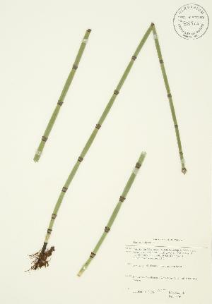 ( - JAG 0356)  @11 [ ] Copyright (2009) Steven Newmaster University of Guelph BIO Herbarium