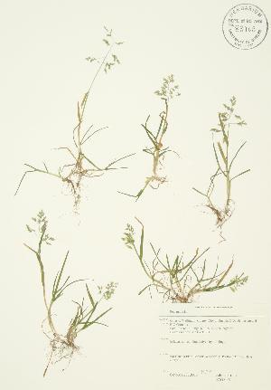 ( - JAG 0361)  @11 [ ] Copyright (2009) Steven Newmaster University of Guelph BIO Herbarium