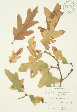 ( - JAG 0373)  @11 [ ] Copyright (2009) Steven Newmaster University of Guelph BIO Herbarium