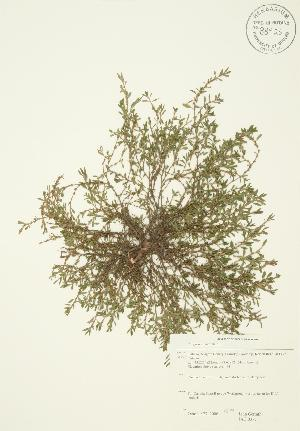 ( - JAG 0377)  @11 [ ] Copyright (2009) Steven Newmaster University of Guelph BIO Herbarium