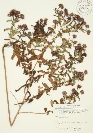 ( - JAG 0380)  @11 [ ] Copyright (2009) Steven Newmaster University of Guelph BIO Herbarium