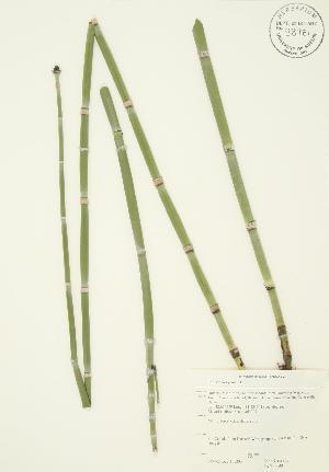 ( - JAG 0390)  @11 [ ] Copyright (2009) Steven Newmaster University of Guelph BIO Herbarium