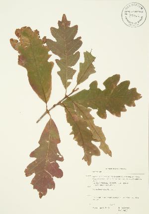 ( - JAG 0407)  @11 [ ] Copyright (2009) Steven Newmaster University of Guelph BIO Herbarium