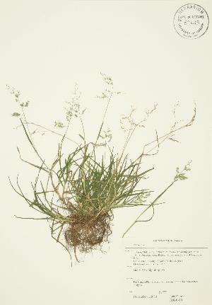 ( - JAG 0410)  @11 [ ] Copyright (2009) Steven Newmaster University of Guelph BIO Herbarium
