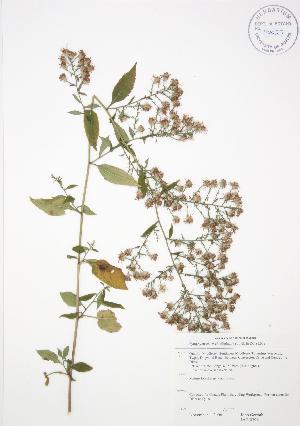 ( - JAG 0396)  @11 [ ] Copyright (2009) Steven Newmaster University of Guelph BIO Herbarium
