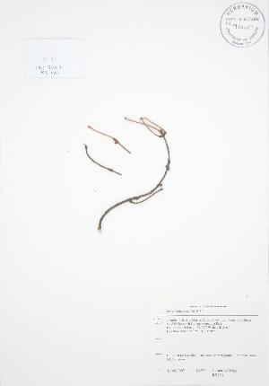 ( - RS186)  @11 [ ] Copyright (2009) Steven Newmaster University of Guelph BIO Herbarium