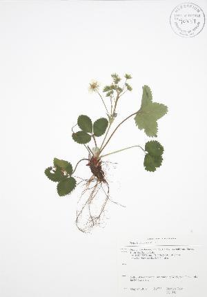 ( - HC 002)  @11 [ ] Copyright (2009) Steven Newmaster University of Guelph BIO Herbarium
