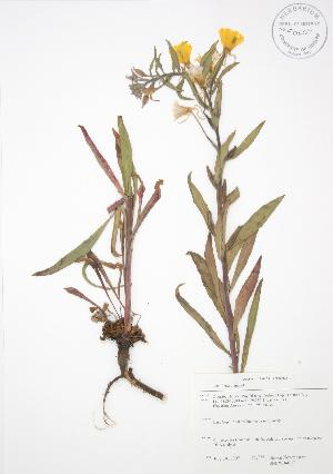 ( - SNEW046_C)  @11 [ ] Copyright (2009) Steven Newmaster University of Guelph BIO Herbarium