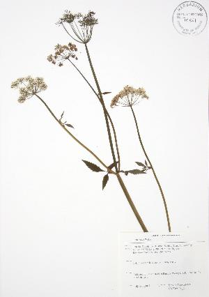 ( - SNEW048_C)  @11 [ ] Copyright (2009) Steven Newmaster University of Guelph BIO Herbarium