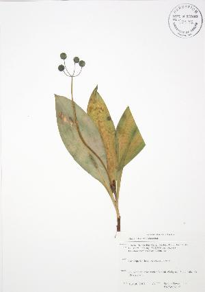( - SNEW061_C)  @11 [ ] Copyright (2009) Steven Newmaster University of Guelph BIO Herbarium