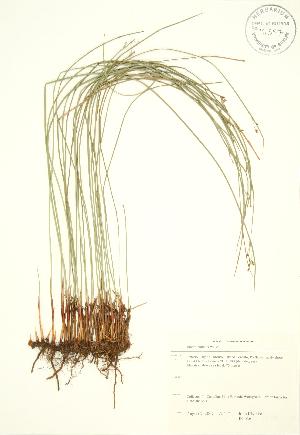 ( - JK 036)  @11 [ ] Copyright (2009) Steven Newmaster University of Guelph BIO Herbarium
