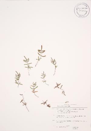( - JAG 0276)  @11 [ ] Copyright (2009) Unspecified University of Guelph BIO Herbarium