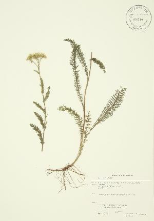 ( - JAG 0003)  @11 [ ] Copyright (2009) Steven Newmaster University of Guelph BIO Herbarium