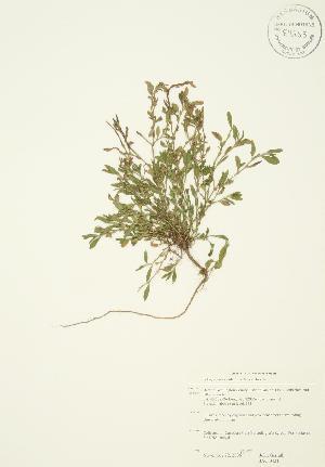 ( - JAG 0421)  @11 [ ] Copyright (2009) Steven Newmaster University of Guelph BIO Herbarium