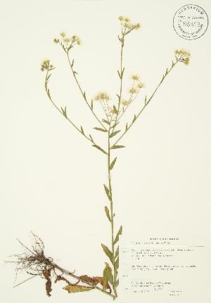 ( - JAG 0273)  @11 [ ] Copyright (2009) Steven Newmaster University of Guelph BIO Herbarium