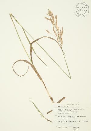 ( - JAG 0287)  @11 [ ] Copyright (2009) Steven Newmaster University of Guelph BIO Herbarium