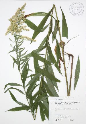 ( - JAG 0145)  @11 [ ] Copyright (2009) Steven Newmaster University of Guelph BIO Herbarium