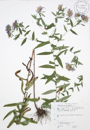( - JAG 0150)  @11 [ ] Copyright (2009) Steven Newmaster University of Guelph BIO Herbarium