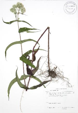 ( - NTW 166)  @11 [ ] Copyright (2009) Unspecified University of Guelph BIO Herbarium
