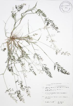 ( - JAG 0138)  @11 [ ] Copyright (2009) Steven Newmaster University of Guelph BIO Herbarium