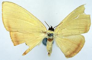 (Antarchia - CCDB-11875-E09)  @11 [ ] CreativeCommons - Attribution Non-Commercial Share-Alike (2014) David Polluck Biodiversity Institute of Ontario
