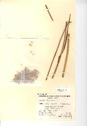 (Allium oleraceum - NMW025)  @11 [ ] Unspecified (default): All Rights Reserved  Unspecified Unspecified