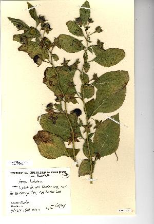 (Atropa belladonna - NMW079)  @11 [ ] Unspecified (default): All Rights Reserved  Unspecified Unspecified