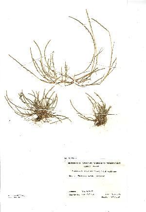 (Parapholis - NMW3324)  @11 [ ] CreativeCommons - Attribution (2012) National Museum Wales National Museum Wales