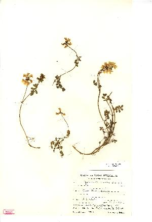 (Hippocrepis - NMW416)  @11 [ ] Unspecified (default): All Rights Reserved  Unspecified Unspecified