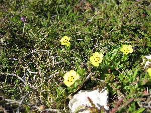 (Tuberaria - NBGW6047)  @11 [ ] Unspecified (default): All Rights Reserved  Unspecified Unspecified