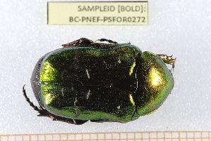( - BC-PNEF-PSFOR0272)  @11 [ ] Copyright (2013) Thierry Noblecourt Laboratoire National d'Entomologie Forestière, Quillan, France